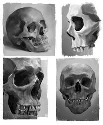 Skull Studies by JoshSummana