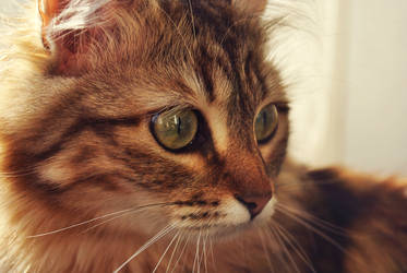 my cat 3 by vadimfrolov