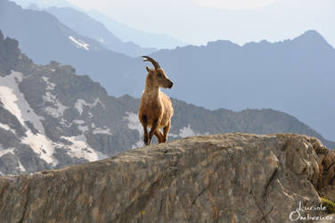 King of the mountains by DarKira33