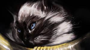 Blue Eyed Cat by johannschill