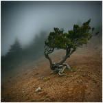 Pico Ruivo - Arthritis by yv