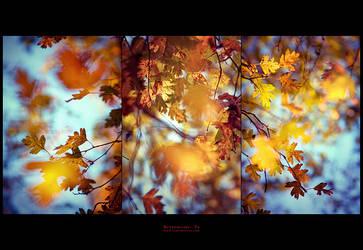 Butterflies by yv