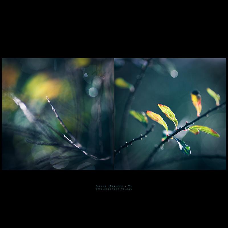 Apple Dreams by yv