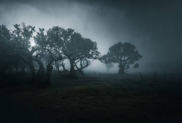 Fanal - Treeline