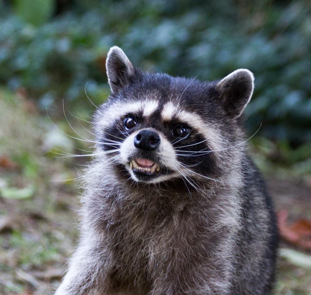 the internet is serious business  post grumpy animals    brokehugs