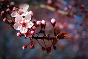 Plum Tree by OhEmGe3