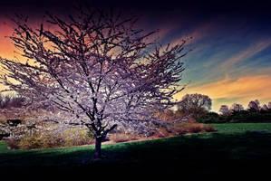 Tree v4 by OhEmGe3