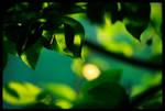 Green Evening