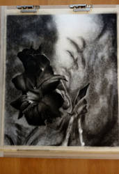 Drawing in charcoal 60cm x 50cm by Pusika3
