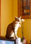 cats eat flowers