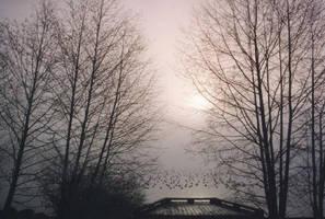 this mist...our bridge