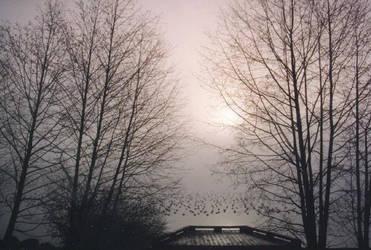 this mist...our bridge by calcross