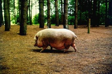 bacon anybody? by calcross
