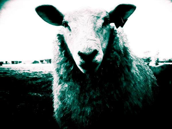 -The grazer- by calcross
