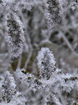 -froze- by calcross