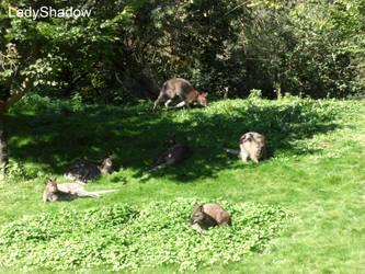 .: Kangaroo Group :.