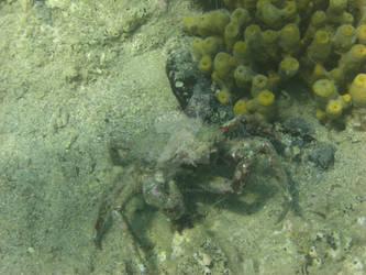 .: Underwater - Crab :.