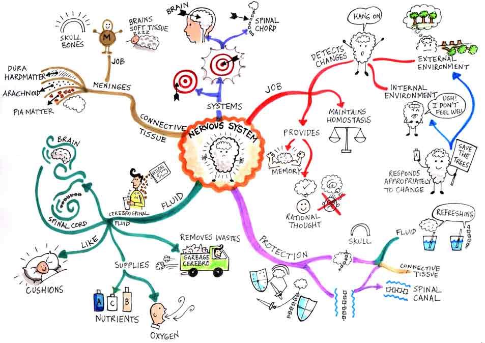Human Biology Map by hussain72m on DeviantArt