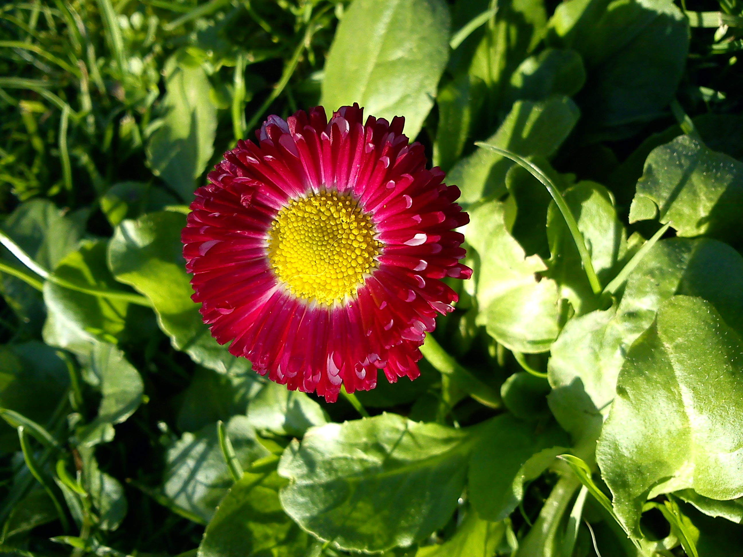 Pink Flower In November By Crissandy On Deviantart