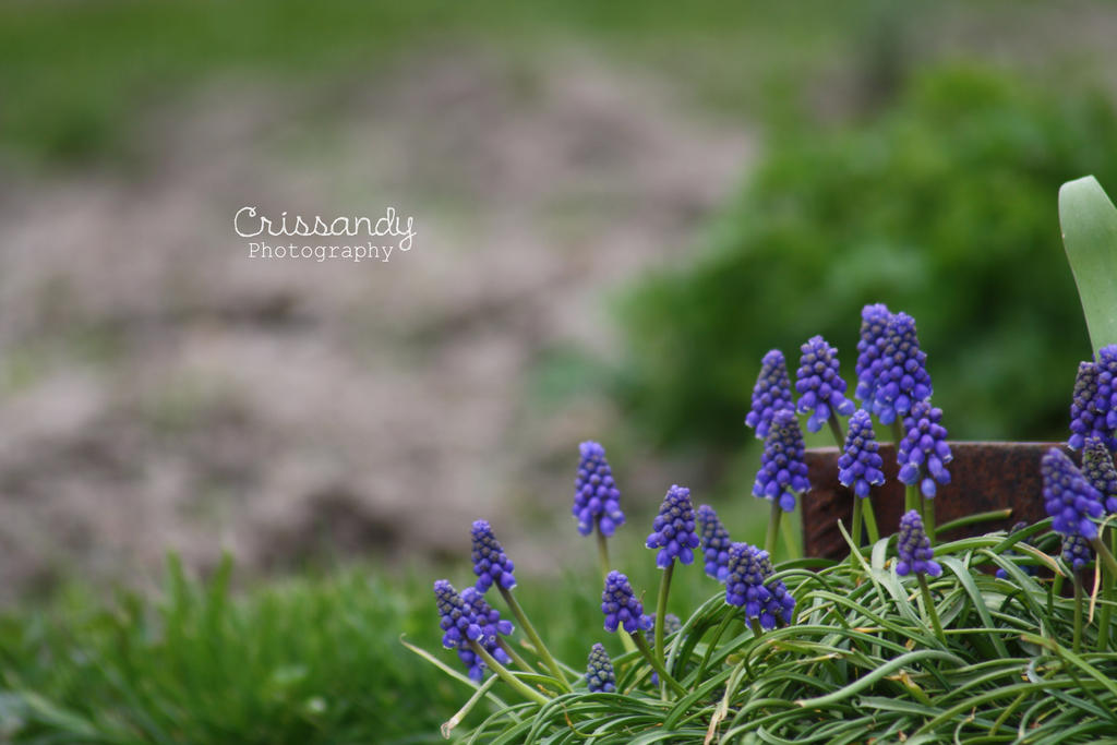 cute little purple flowers by crissandy on deviantart, Beautiful flower