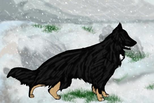 WolfRuns A Christmas wish Di IMK by blueshinewolfstar1