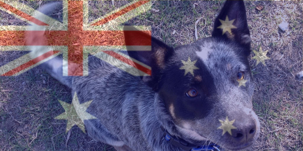 Happy Australia Day by blueshinewolfstar1