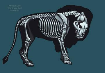 Lion Skeleton by Tikall