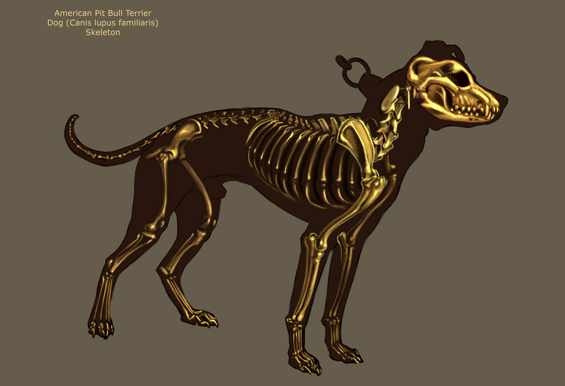 Dog Skeleton by Tikall on DeviantArt
