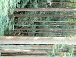 Kodo Forest