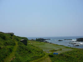 Rice Farm by the Sea by katters