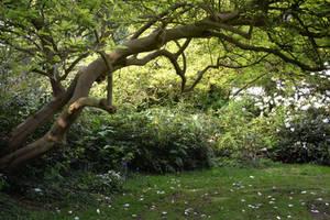 Nature 13 by GardenOfBlackRoses-S