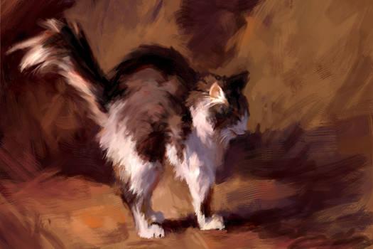 The cat of Susan