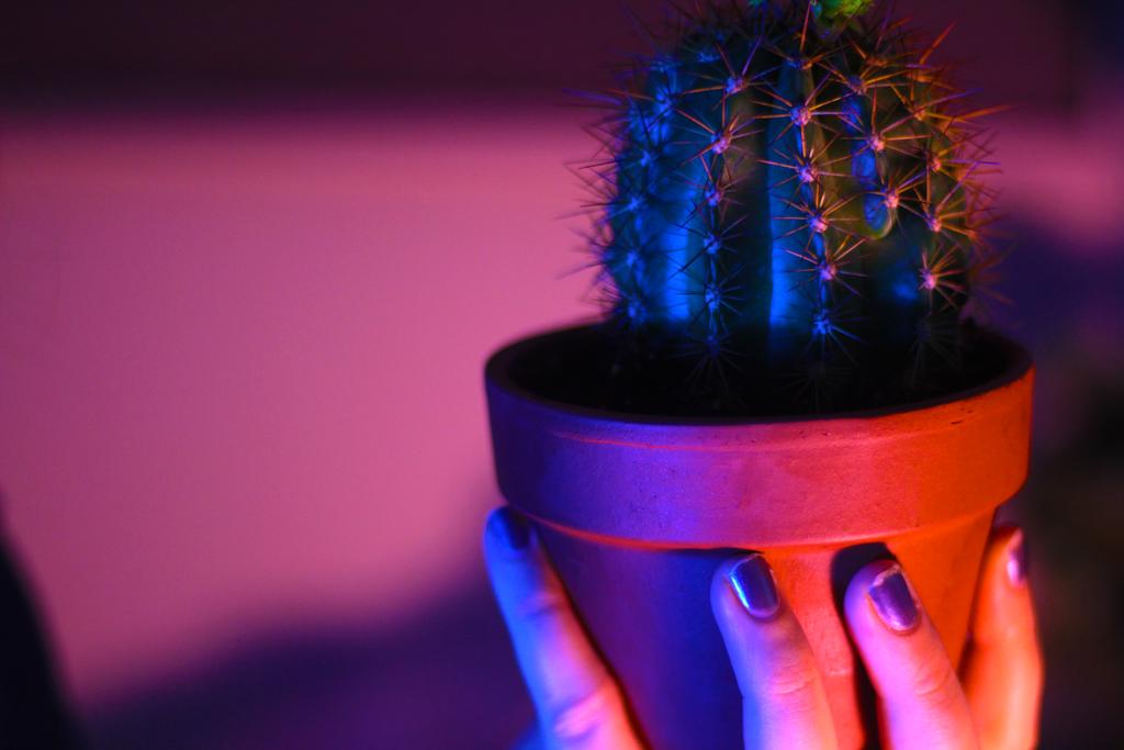 cactus friend by mandy4812