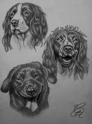 Dog Sketches by Gem-D