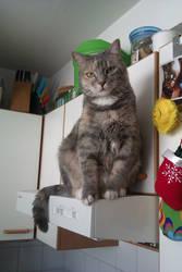 Chandra Devi Cat