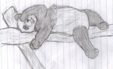 Panda by caitiedidd