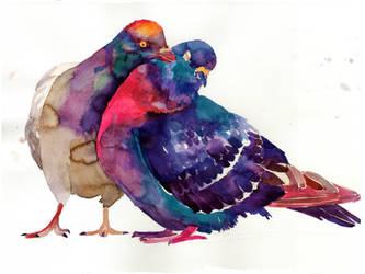 Pigeons by takmaj