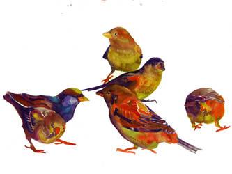 Sparrows by takmaj