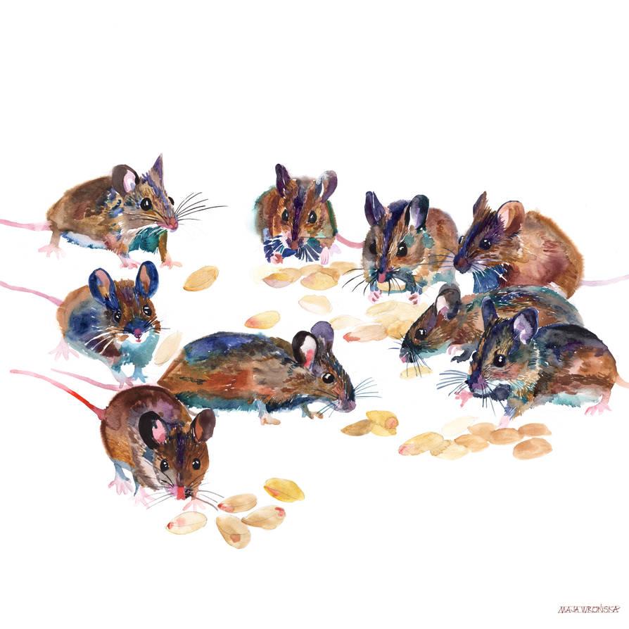 Mice by takmaj