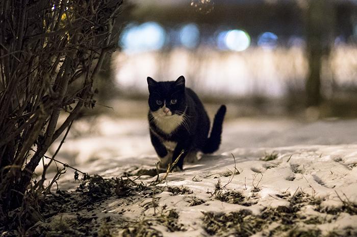 cat by klemex