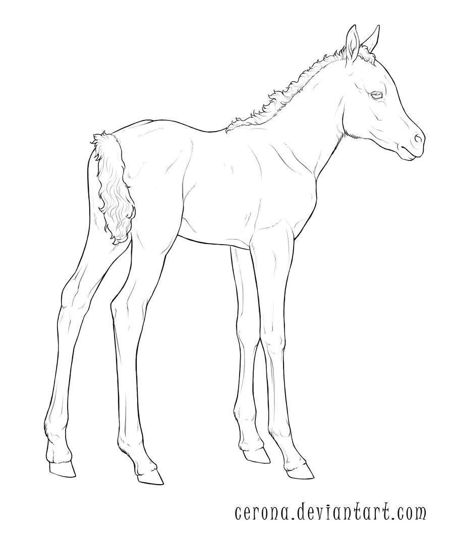 Lineart: Foal by cerona