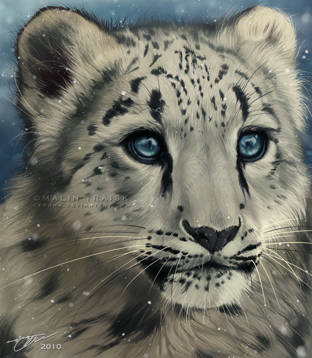 Snow Cub by cerona