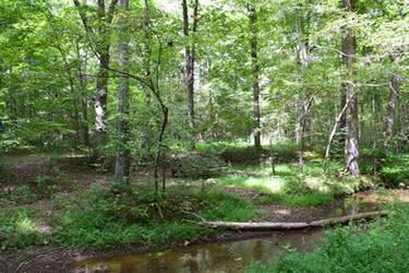 Old Nature on Poop Creek