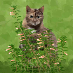 In the Weeds (alternate version)