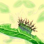 Caterpillar - week of bugs!
