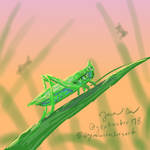 Grasshopper - week of bugs!