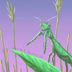 Mantis - week of bugs!