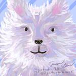 polar bear fellow - polar week