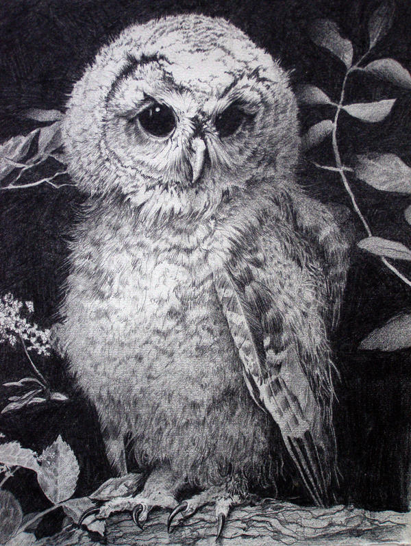 Owl by Mad-Margaret
