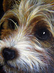 WIP puppy